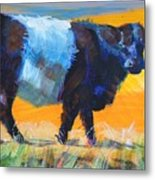 Belted Galloway Cow Side View Metal Print