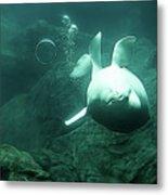 Beluga Whale 2 Metal Print