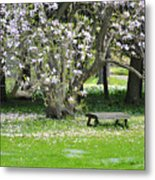 Bench Among Magnolia Metal Print