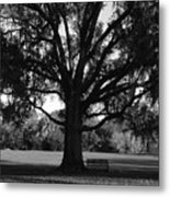 Bench Under Oak Metal Print