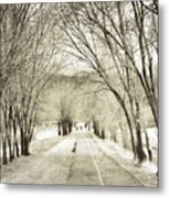 Beneath The Branches Metal Print