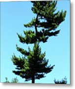 Beneath This Tree Lies Robert Edwin Peary Metal Print