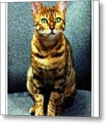 Bengal Cat Digital Oil Pastel Metal Print