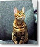 Bengal Cat Oil Pastel  Metal Print