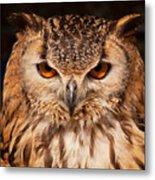Bengal Owl Metal Print
