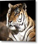 Bengal Tiger Sitting In Silent Shadows Metal Print
