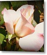 Benicia Pink 2 Metal Print