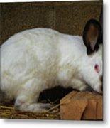 Benny Bunny Metal Print