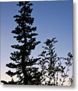 Bent Conifer Metal Print