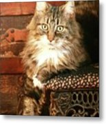 Beo Woof Posed Metal Print