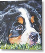 Bernese Mountain Dog In Grass Metal Print