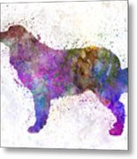 Bernese  Mountain Dog In Watercolor Metal Print