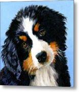 Bernese Mountain Puppy Metal Print