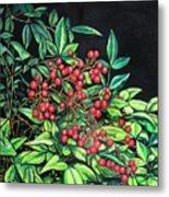 Berries - Pyracantha Metal Print
