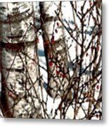 Berries And Birches Metal Print