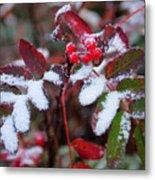 Berries And Snow Metal Print