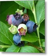 Berries Beautiful Metal Print