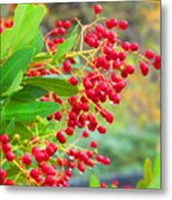 Berries Macro Metal Print