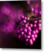Berries Still Life Metal Print