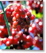 Berry Berry Red-1 Metal Print