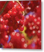 Berry Berry Red-2 Metal Print