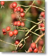 Berry Christmas  Metal Print