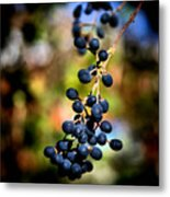 Berry Cold Out Metal Print by Karen Scovill