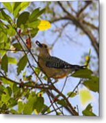 Berry Good Woodpecker Metal Print