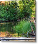 Beside The River Metal Print