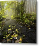 Beside The Stream Metal Print