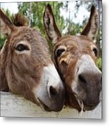 Best Buddies 2 Metal Print