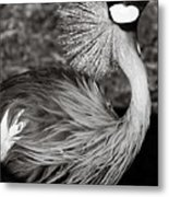 Best Feathers Ever Metal Print