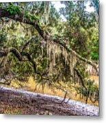 Bethany Cemetery Oaks And Tidal Creek Metal Print