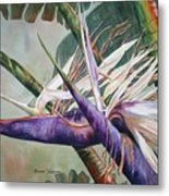 Betty's Bird - Bird Of Paradise Metal Print