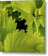 Between The Leaves Metal Print