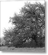 Between Two Trees Metal Print