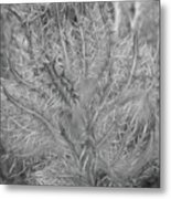 Beutiful Weed Metal Print