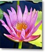 Beyond Beautiful Water Lily Metal Print