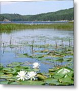 Beyond The Lilly Pads Metal Print