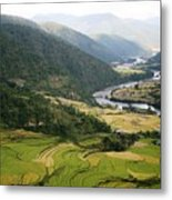 Bhutan Rice Fields Metal Print