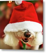 Bichon Frise Dog In Santa Hat At Christmas Metal Print