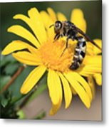 Big Bee On Yellow Daisy Metal Print