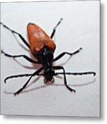 Big Beetle Metal Print