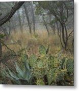 Big Bend Fog On Lost Mines Trail Metal Print