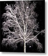 Big Birch Metal Print