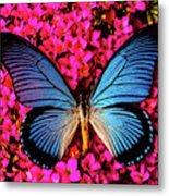 Big Blue Butterfly On Kalanchoe Flowers Metal Print