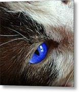 Big Blue Eyes Cat Metal Print