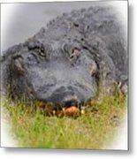 Big Boy Gator 2 Metal Print