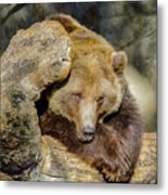 Big Brown Bear Metal Print