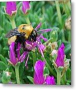 Big Bumblebee Metal Print